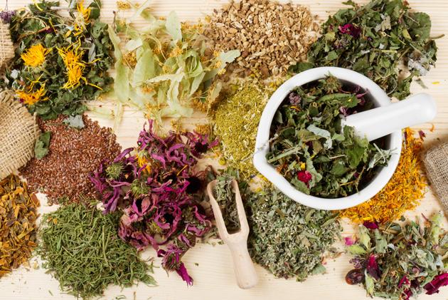 Sejarah Kekayaan herbal nusantara asli indonesia